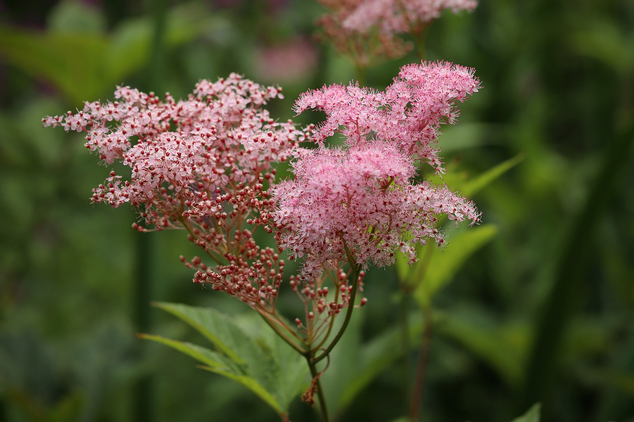 plantes à cultiver pour se soigner